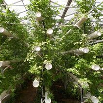 智慧農業溫室水培植物工廠蔬菜種植大棚