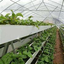连栋薄膜温室 无土栽培 草莓种植大棚