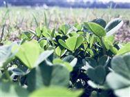 """拼多多发起AI农业挑战赛 动了阿里、腾讯、京东的""""绿色""""蛋糕?"""